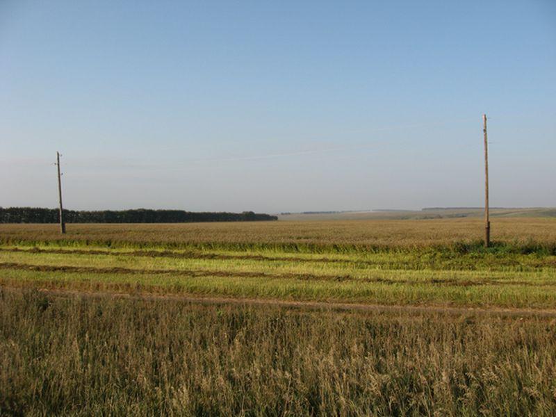 Россия. Алтайский край. Поля. Russia. Altai region. Fields.