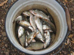 Россия. Башкирия. Река Белая. Рыбалка. Russia. Bashkiria. White River. Fishing.