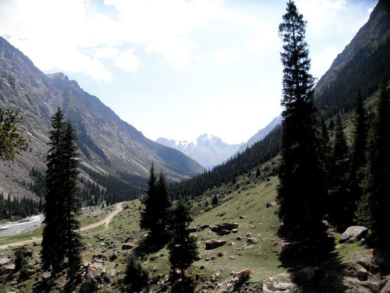 Тянь-Шань. Киргизия. Ущелье реки Барскаун. Tien Shan. Kyrgyzstan. Gorge of the Barskaun River.